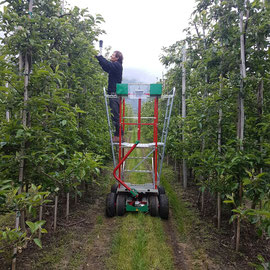 The working platform in a small apple plant