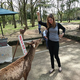 Rice crackers for feeding the deer  in Nara-park