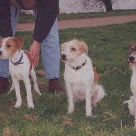 Chila, Ayke und Corff vom Steenbrook