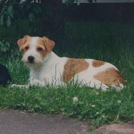 Chiewa (Chila) vom Wolfsberg in jungen Jahren