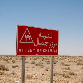 Warnung vor dummen Kamelen