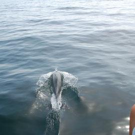 Auf der Fahrt zu der vorgelagerten Insel Chacachacare werden wir eine ganze Weile begleitet.