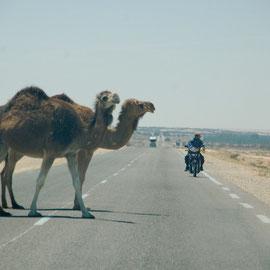 .....und gehen genau dann auf die Fahrbahn als ein schnellerer Motorradfahrer die Stelle passieren möchte