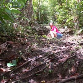 Trail durch den Dschungel im Hochland von Martinique