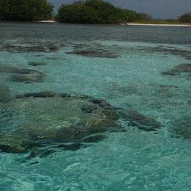 Herrliche Korallen in geringer Tiefe