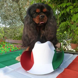 o4/10/2017 Charlie Hannover Levante Primo dei Piccoli Demoni viene ufficialmente proclamato campione italiano di bellezza,grande traguardo per un black and tan,ringrazio Marilù e Franco per aver reso possibile tutto questo.