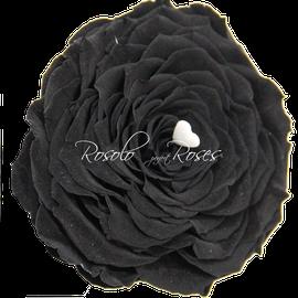 Rose Blanc Giant