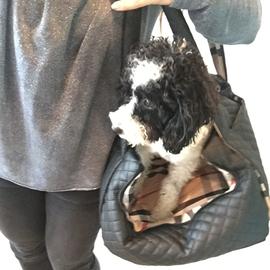 aef5c5ff608bc Hier noch ein paar Impressionen von Hund   Tasche