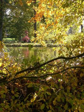 l'ombrage autour de l'étang