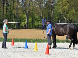 Mit dem Pferd als Co-Coach bessere Entscheide treffen - horse-feedback.ch