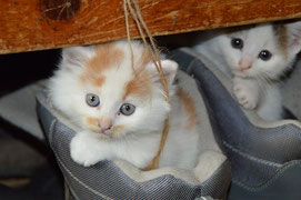 Katzenbetreuung Alltagshilfe-Landsberg