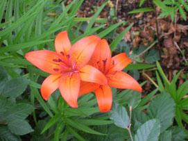 Flores de Findhorn-Escocia ©Mara Cascón