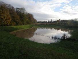 Prairie inondable à Saint-Martin-Osmonville