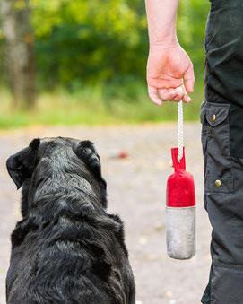 Apportieren und Dummyarbeit in der Hundeschule in Offenbach und Heusenstamm. Foto: Fotolia_56287373_S