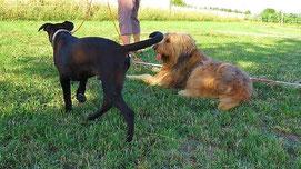 Hundetraining durch Körpersprache in der Hundeschule aus Offenbach und Heusenstamm.