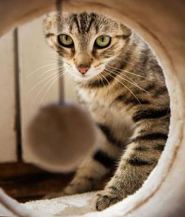 Katze schaut in eine Katzenhöhle