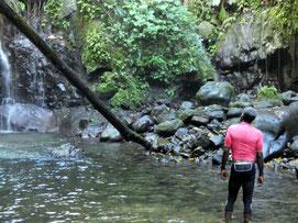 sortie en foret tropicale basse terre Guadeloupe