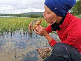 Outdoor- und Aktivurlaub Schweden Lappland - Kanutag und Angeln Schweden Lappland