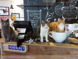 cafe-chat-l-heureux