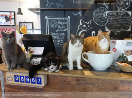 cafe-chat-l-heureux