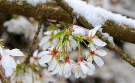conseils pour le printemps