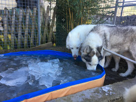 Blizzard und Yukon beim Eisfischen