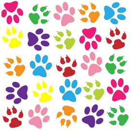 ポメラニアンはとてもカラフルな犬種
