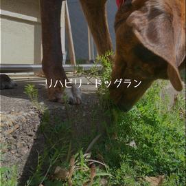 庭遊び~リハビリドッグラン