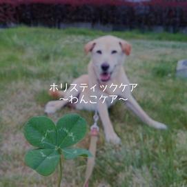 ホリスティックケア~犬整体・温灸・薬膳・ハーブケア