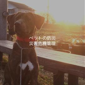 ペットの防災・災害危機管理