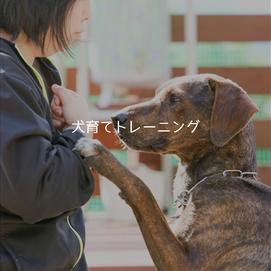 犬育てトレーニング