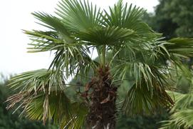 Unser Großes Sommerturnier unter Palmen