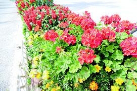新栄町婦人会の花壇=4日午後、平和祈念館前