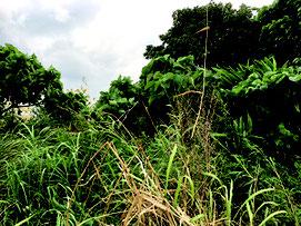 県内の再生困難とされる荒廃農地(県農政経済課提供)