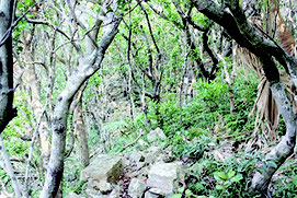 田名城跡の頂上部付近の石積の状況(県教育長文化財課提供)