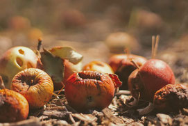 Pomme pourrie