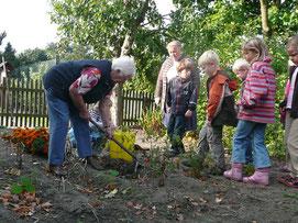 Bild vom Gärtnern der Landfrauen mit den Kindern aus dem Regenbogenkindergarten