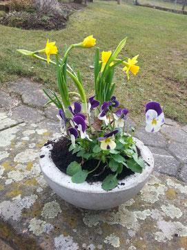 selbstzementierte Blumentöpfe