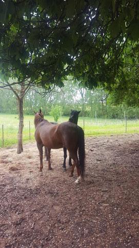 Liebe und Dank an und für das eigene Pferd