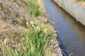 6月 早苗餐(さなぼり)の 2月 水辺にも れんげいじにも 春の風