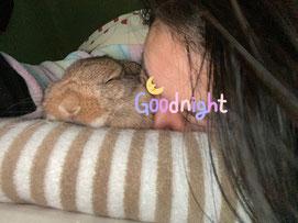 飼い主と一緒に寝るうさぎ