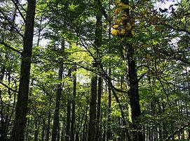 森林(Wikipediaから借用)