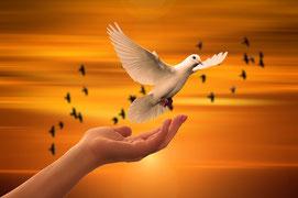Karma Yoga Yogawege Yin Yoga Kurs Michaela Hold München Familienaufstellung Holistic Pulsing Ausbildung Kartenlegen