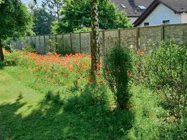 Naturnahe Blüten- und Fruchthecke (Foto: Jan Paaz)