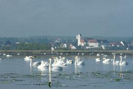Pressebild Federsee mit Blick auf Bad Buchau