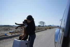 津波で怪我をした犬のレスキュー
