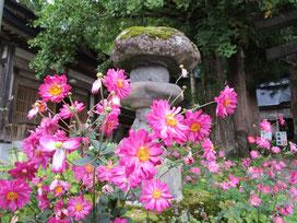 灯篭の前に咲く秋明菊が美しく咲いていました(*´▽`*)