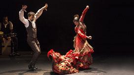 Flamenco Andaloucia