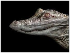 Reptiles. u.Co