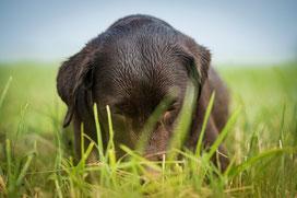 Hundeshooting - ein Hund spielt im Gras